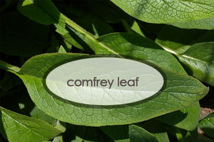 comfrey-leaf.-the-good-stuff-botanicals.jpg