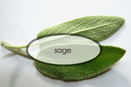 sage.the-good-stuff-botanicals.jpg