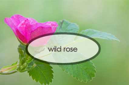 wild-rose.the-good-stuff-botaniclas.jpg